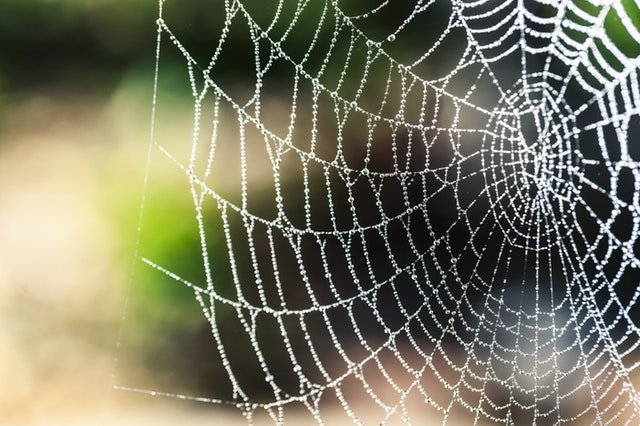 Design Your Web like a Spider